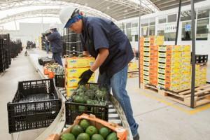 Record de exportaciones-agroalimentarias-
