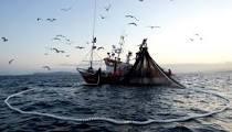 Comisión de Pesca  avala dos dictámenes para fortalecer al sector pesquero