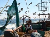 Semarnat destina acciones para  erradicar la pesca ilegal