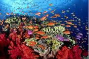 Es responsabilidad de estas autoridades evitar daños a las estructuras coralinas de Veracruz
