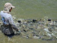 Establece Sader épocas y zonas de veda para captura en Laguna de Yuriria